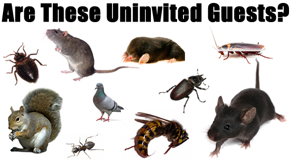 a variety of unwanted pests and bugs commonly found in homes