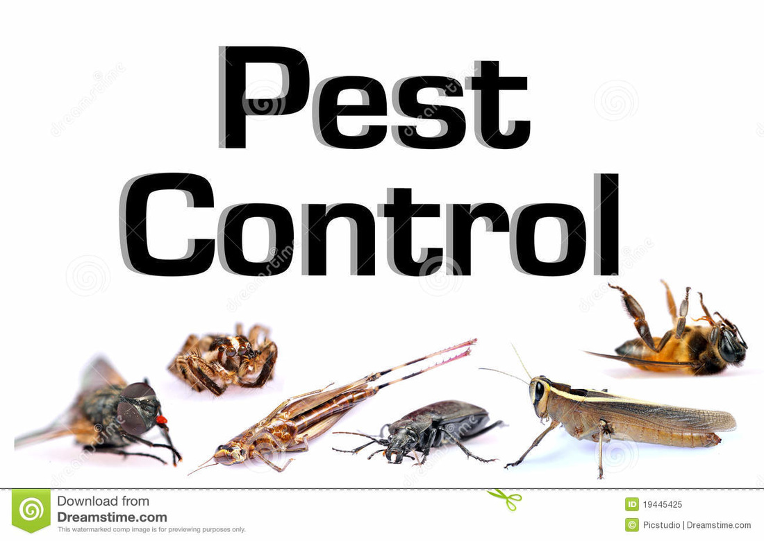 A sign about pest control covered with a variety of bugs